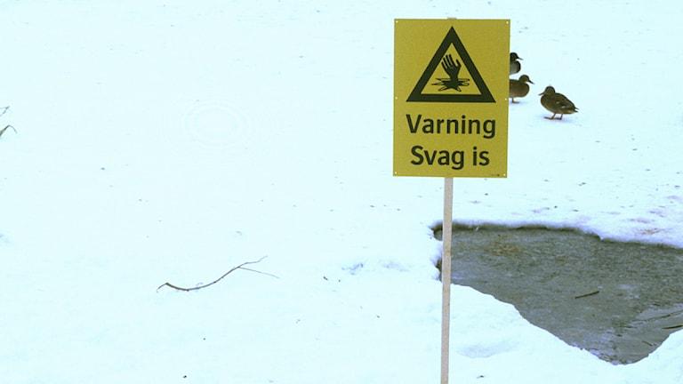 Varningsskylt för svag is. Arkivbild: Peter MyrHamrin/SVT Bild.