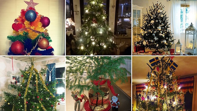 Instagrambilder som föreställer julgranar.