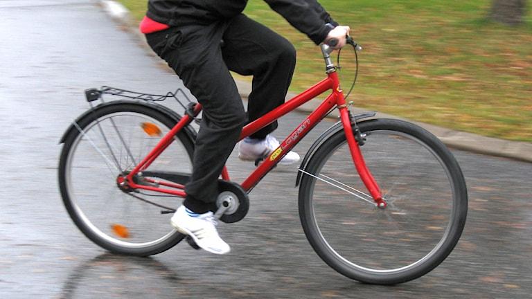 Person på cykel. Foto: Tommy Engman/Sveriges Radio