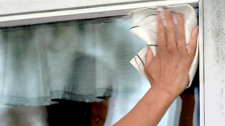 Fönsterputsning pågår. Foto: Hasse Holmberg/Scanpix