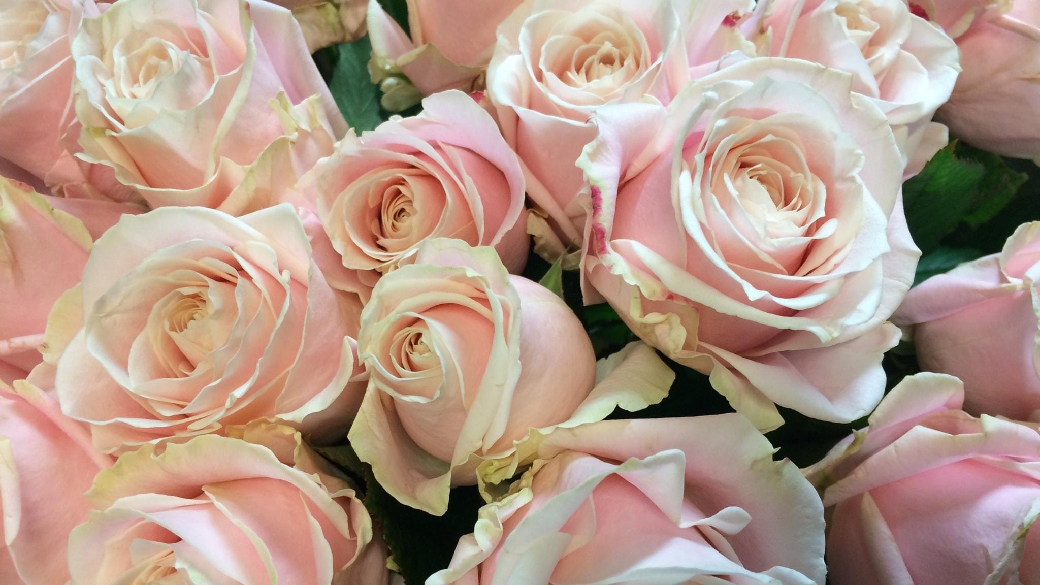 En kärleksfull ros, Hambo om bakfoten och Hornkonsert