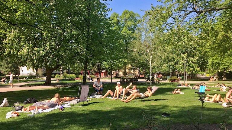 Människor solar i Rudbecksparken i Västerås.