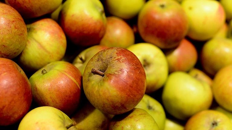 Massor av äpplen / Pontus Lundahl / SCANPIX
