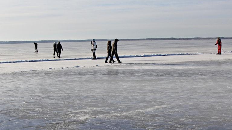 Människor strövar på Mälarisen / Foto: Michael Gawell - Sveriges Radio