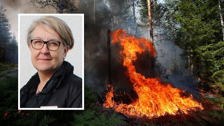 Elisabeth Pettersson från Lantbrukarnas riksförbund, inflikt över bild på skogsbranden.