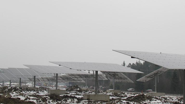 Den nya solcellsparken vid E18. Foto: Patrik Åström/Sveriges Radio.
