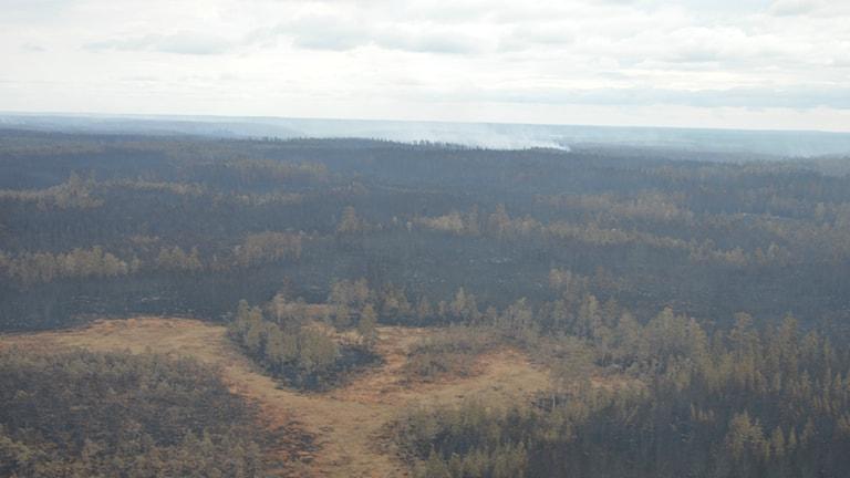 Förödelse efter skogsbranden. Foto: Länsstyrelsen