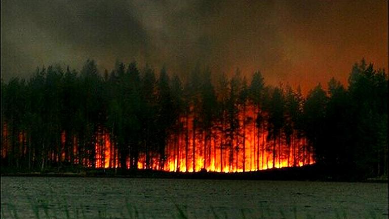 Skogen brinner / Foto: Emil Palmunen