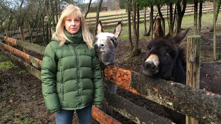 Catrine Tollström med sina två åsnor. Foto: Martin Vare/Sveriges Radio