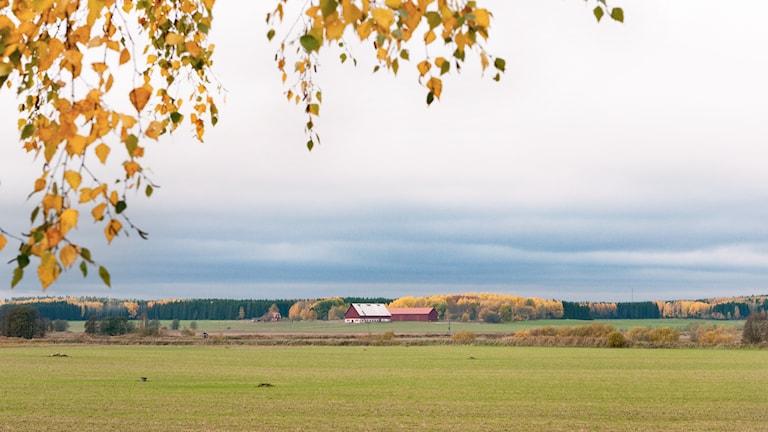 Foto: Pia Lindhe Rudolf/Pila Media.