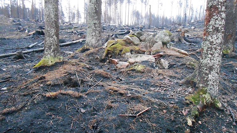 Rester efter en kolarkoja med spisröse av natursten. Foto: Länsstyrelsen i Västmanland.