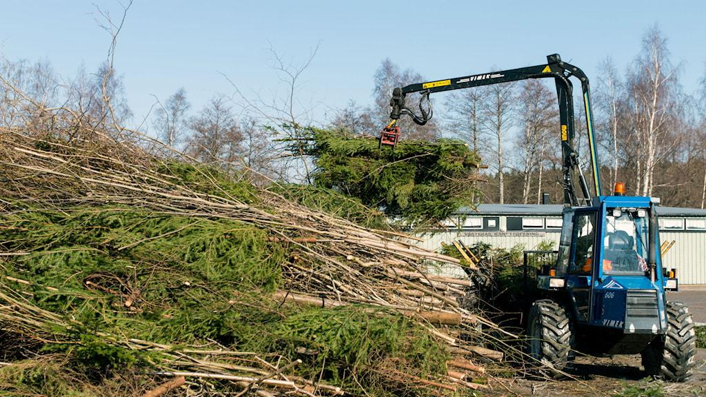 Skogsmaskin lastar av ris Foto: Andreas Eriksson/Sveriges Radio