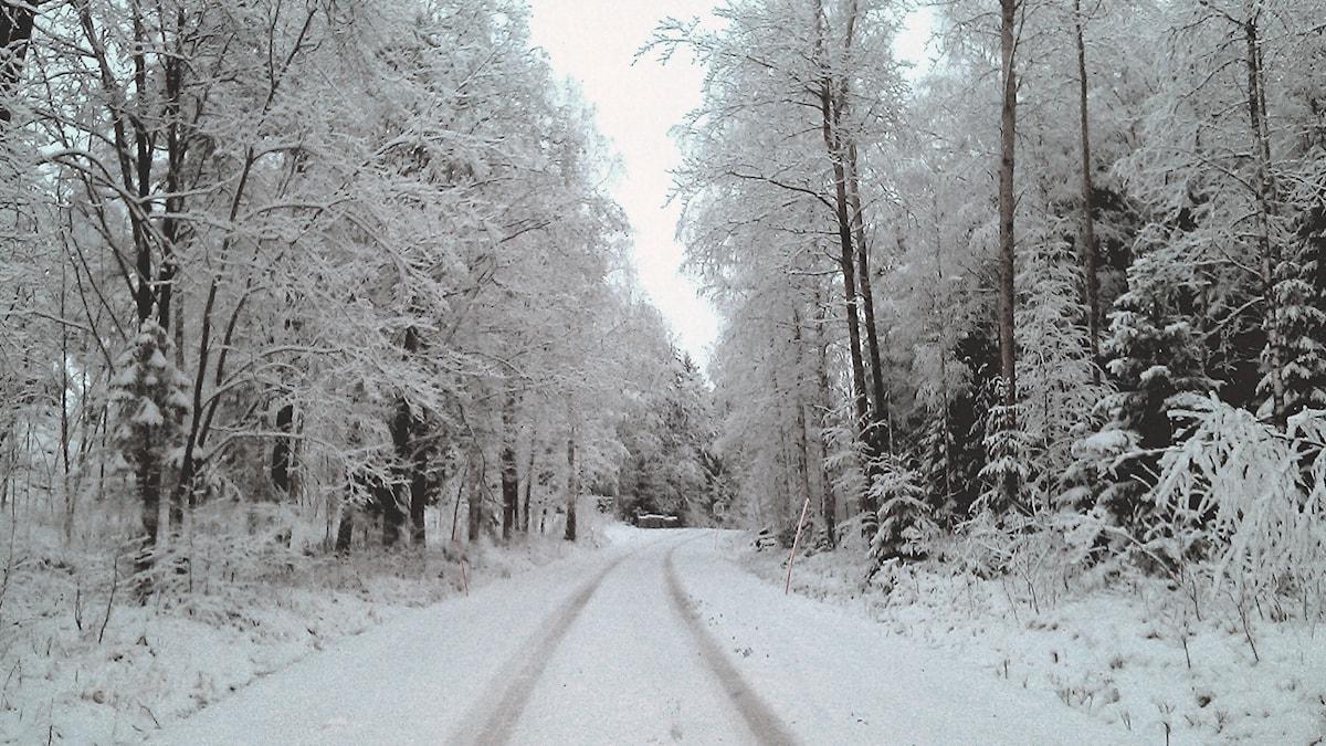 Kylmä vai leuto talvi tulollaan? Foto: Elisabeth Adolfsson Greijer/Sveriges Radio