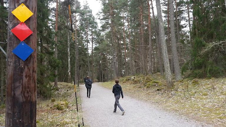 Motionsspår på Björnö i Västerås. / Foto: Michael Gawell. SR.