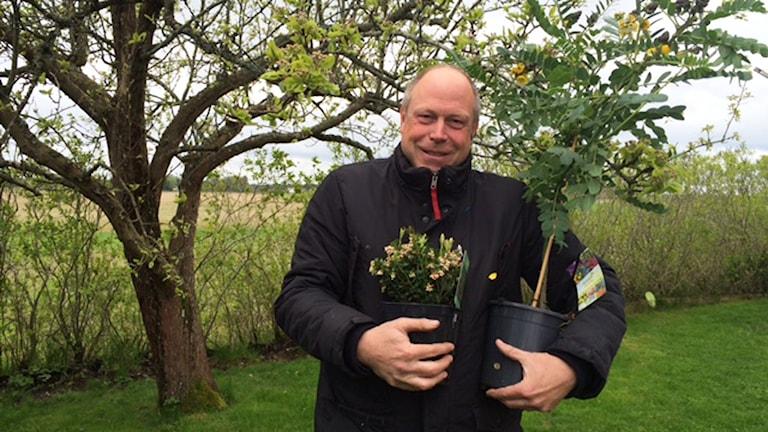 Per Bürger i planteringstagen. Foto: Martin Vare/Sveriges Radio.