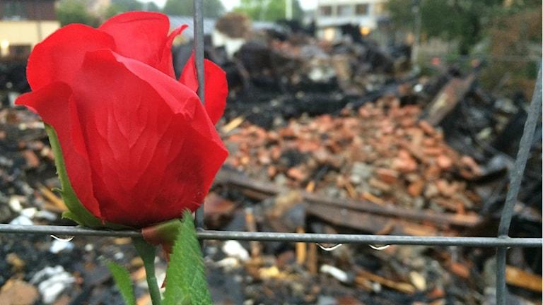 Ödelagda Elsa Andersons konditori snart fyra veckor efter branden. Foto: Filip Annas/Sveriges Radio