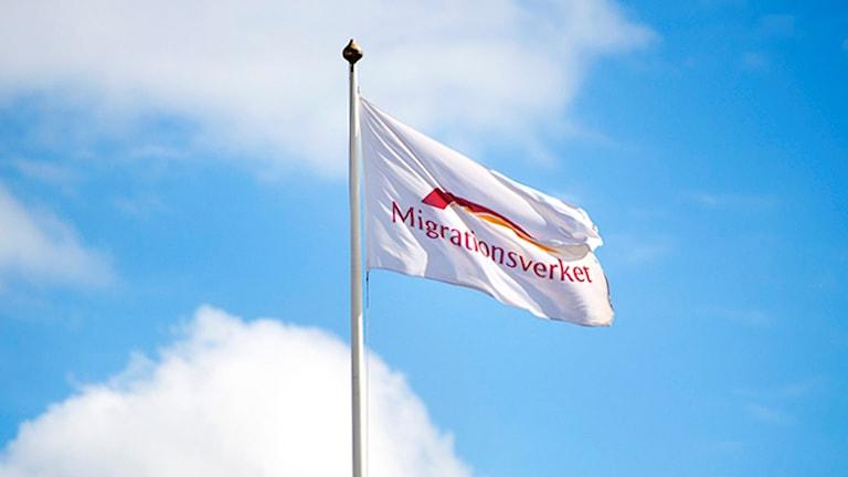 Migrationsverkets flagga. Foto: Ludvig Thunman / TT.