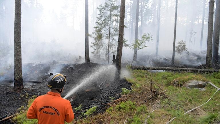 Brandman sprutar vatten vid en skogsbrand i Västmanland. Foto: Henrik Montgomery/TT.