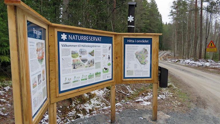 Naturreservatet Hälleskogsbrännan i skogsbrandområdet i Västmanland. Foto: Monica Elfström/Sveriges Radio.
