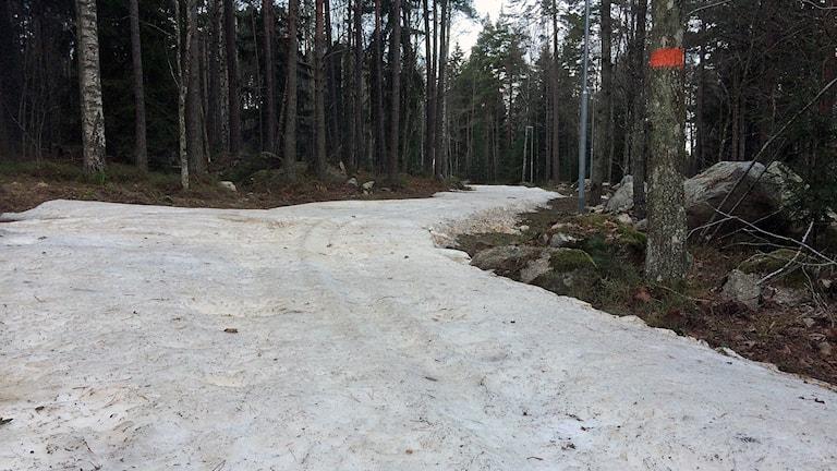 Dåligt med snö i Rocklundaspåret. Foto: Johan Bengts/SR.