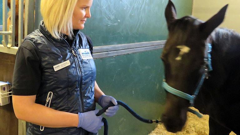 Hästkirurgen Elin Skärlina tittar till en av sina patienter.