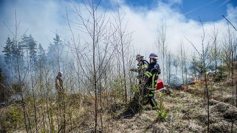 Personal från räddningstjänsten i Norberg och Avesta bekämpar brand i skogsområde öster om Norberg.