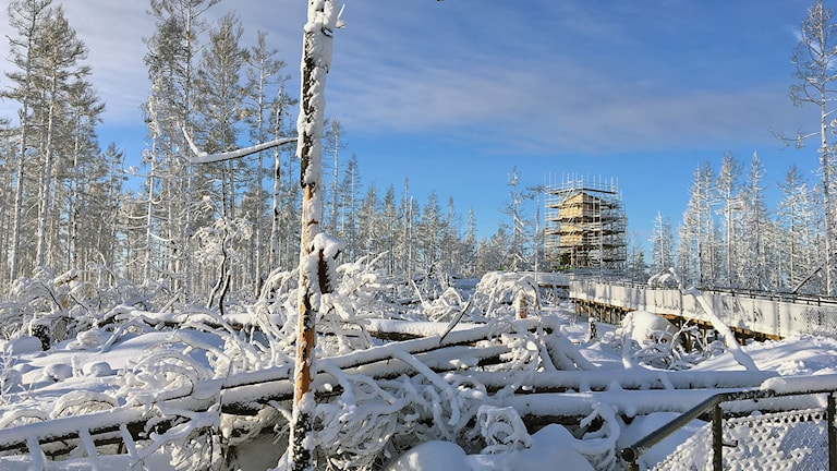 Hälleskogsbrännans naturreservat, utkikstornet vid Grävlingsberget