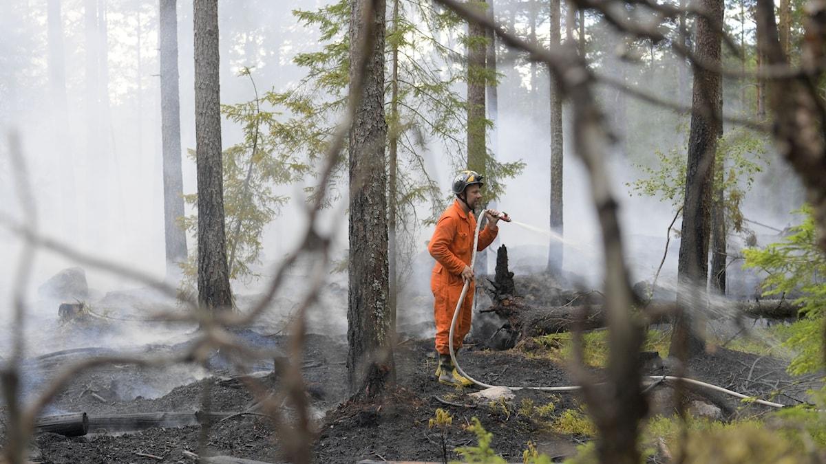 Brandman släcker skogsbrand.
