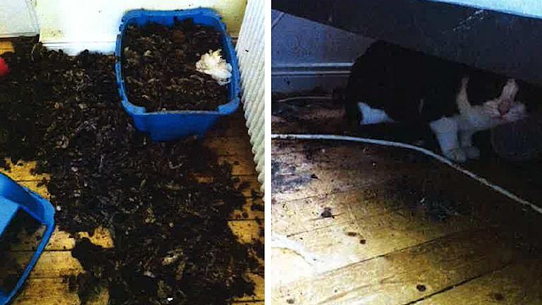 Kattlådor fulla av avföring och smuts.