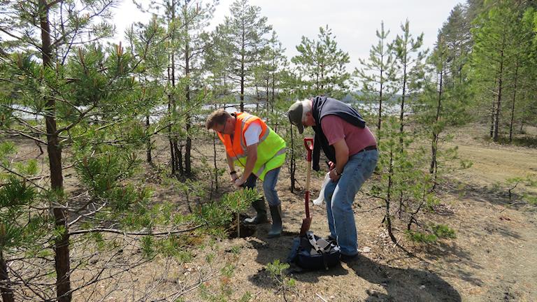 SGU tar jordprover sandmagasin Riddarhyttan