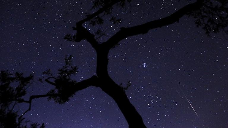 Draconid syns i början av oktober och Orioniderna i slutet av oktober.