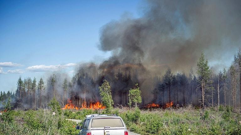 Bild från branden Rörbo. Skogen brinner.