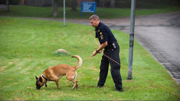 en polis med sin hund söker av en gräsmatta.