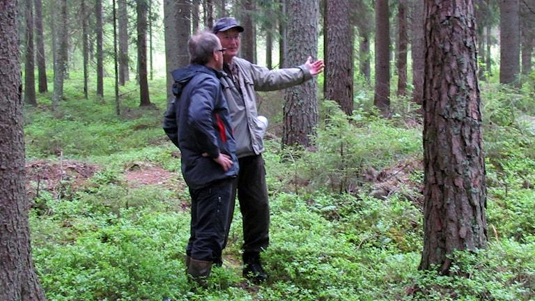 Biologen Leif Johansson visar kommunens naturvårdshandläggare Karl-Erik Johansson ett område i skogen i Skinnskatteberg.