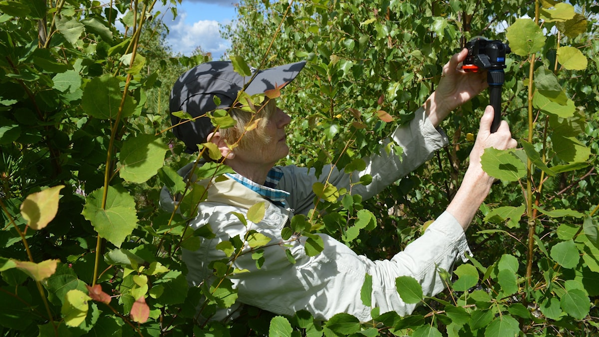 Kvinna i keps fotograferar bland lövsly.