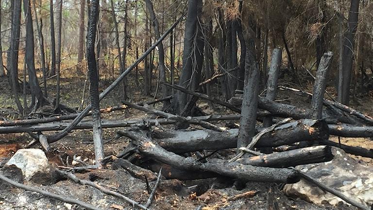 Skogsbranden i Rörbo.