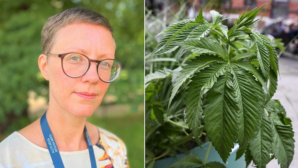 Cannabisplanta och kvinna