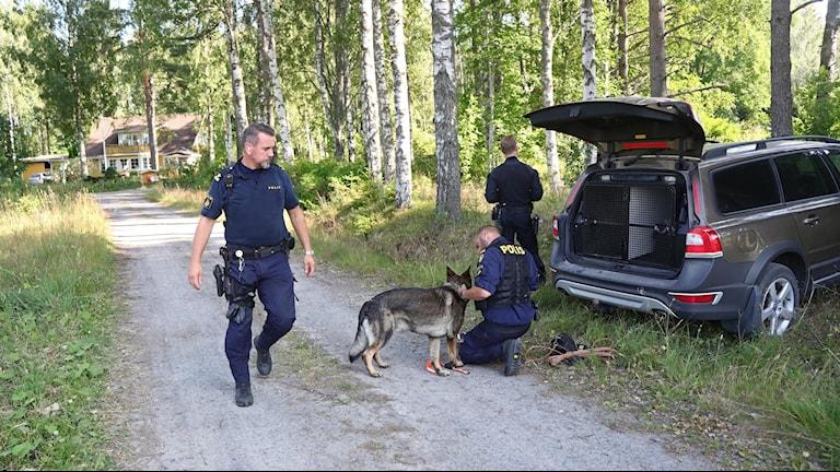 poliser och polishund på en skogsväg.