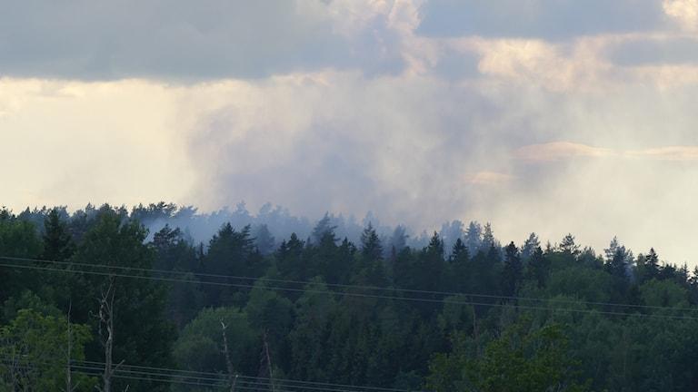 Brand i skog. Foto: Tobias Sternhag.