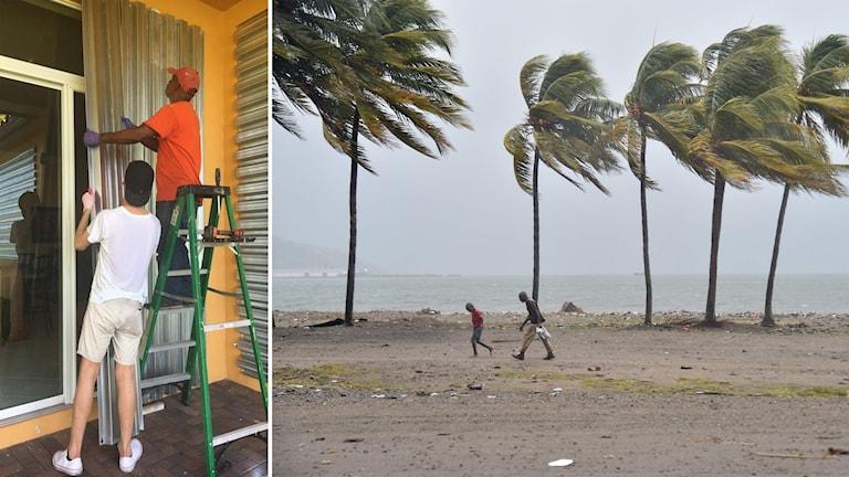 Daniel Sundberg förbereder familjens hus för orkanen Irma.