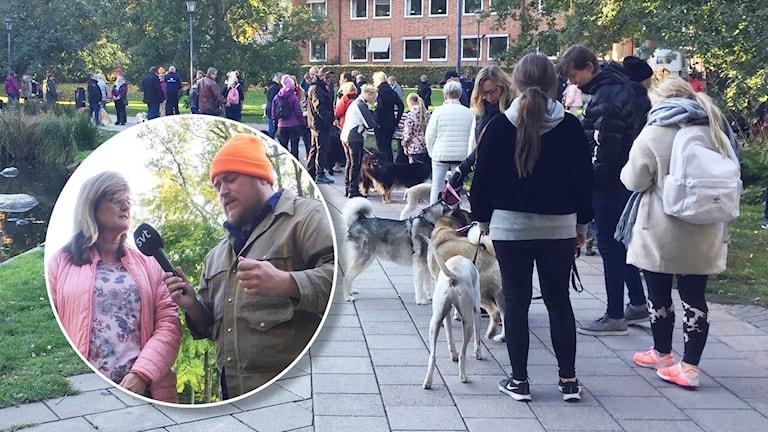 Många hundar och hundägare på led i en park. Infält i bilden en man som intervjuar en kvinna. Foto: P4Västmanland.