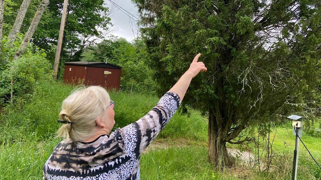 Lena Nilsson är biodlare i Västerås