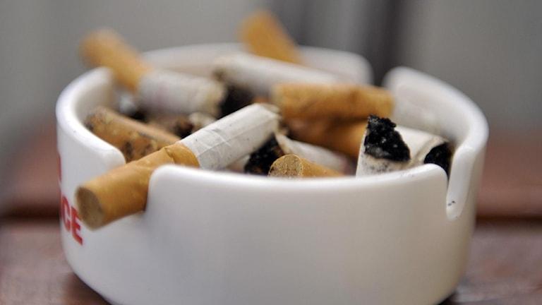Cigarettfimpar i en askkopp / Foto: Bertil Ericson TT