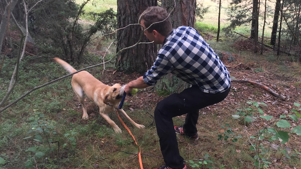 Man och hund drar i var sin enda av ett kort rep.