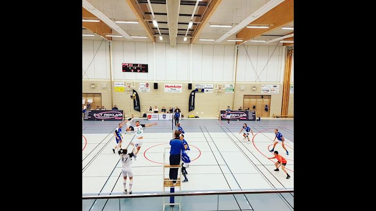 Tierp volley kämpade tappert hemma mot Linköping men föll med 0-3.