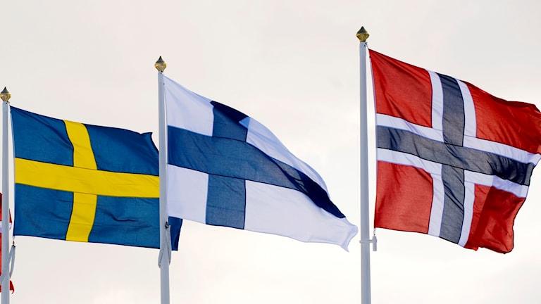 Nordiska flaggor. Fr v: Sverige, Finland och Norge.