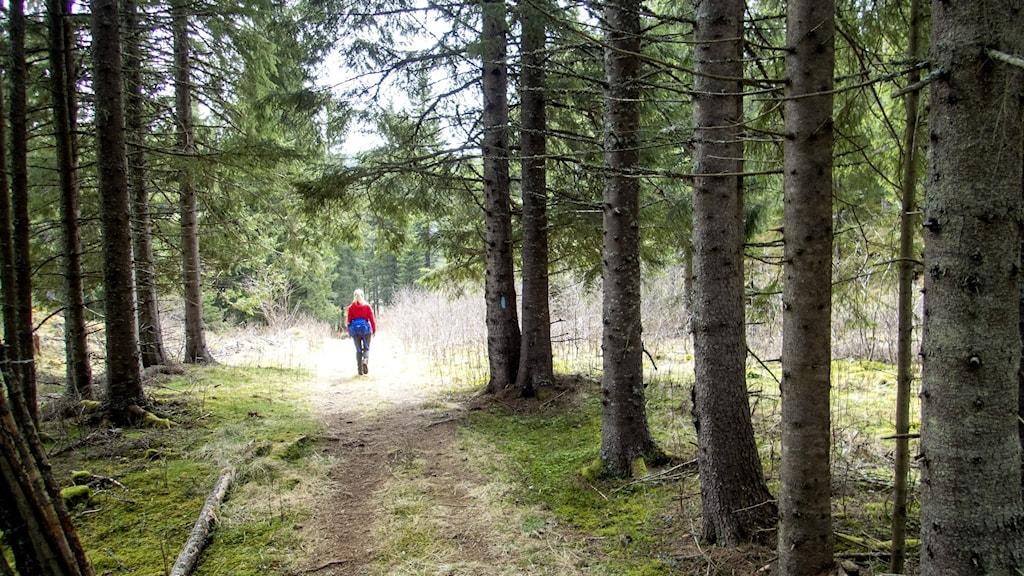 Kvinna som går mellan träd i skogen längs stig.