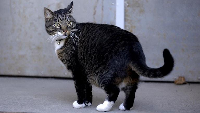 Katten på bilden har inget med händelsen att göra. Foto: Janerik Henriksson / Scanpix