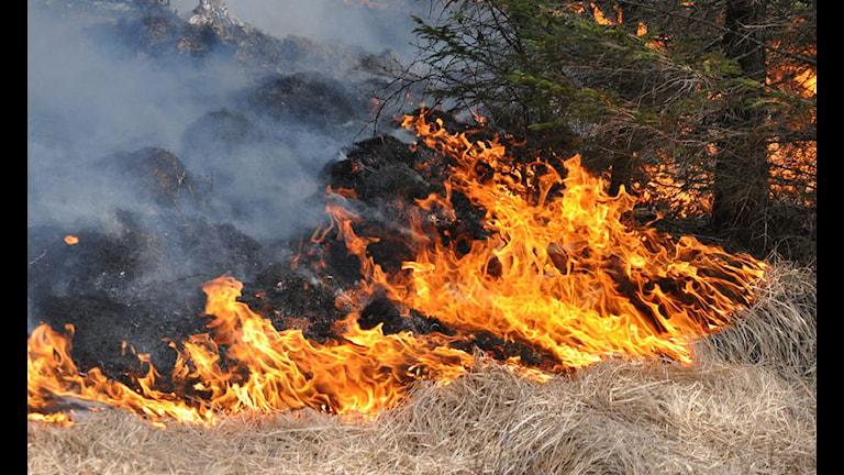 gräsbrand, gräsbränder, brand, bränder, lågor Foto: Jørn Bærheim/Scanpix.