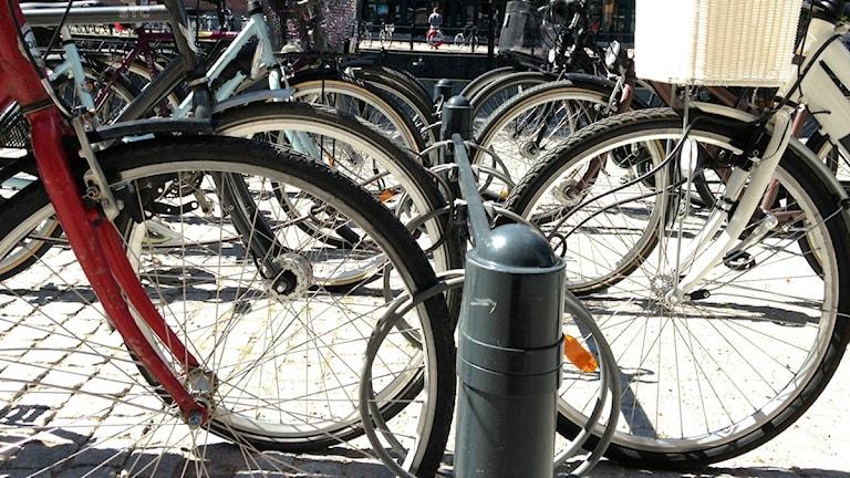 Cyklar i Uppsala. Foto: Cathrin Reth / Sveriges radio
